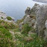 Felsenküste an der Pointe du Van