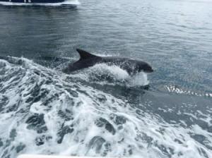 Delphin Funghi P1110932