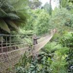 Lost Gardens-Dschungelbrücke