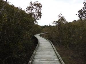 Mangroven Walkway