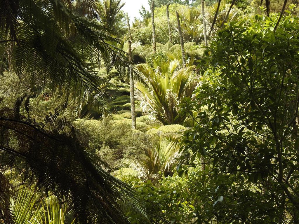 Subtropischer Urwald
