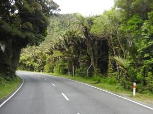 Paparoa NP-Regenwald