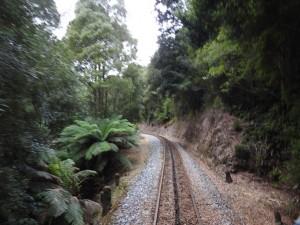 Fahrt in den Regenwald