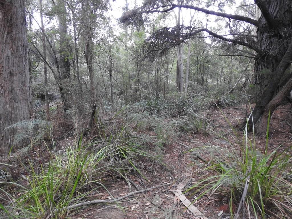 Tasmanien Südspitze Wilderness